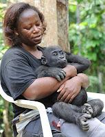 γοριλάνθρωπος με γορίλα,αγκαλιά γορίλα,αφρικάνα,gorilla human with gorilla,gorilla hug,african