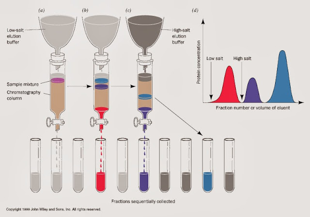 純化蛋白質(protein purification)