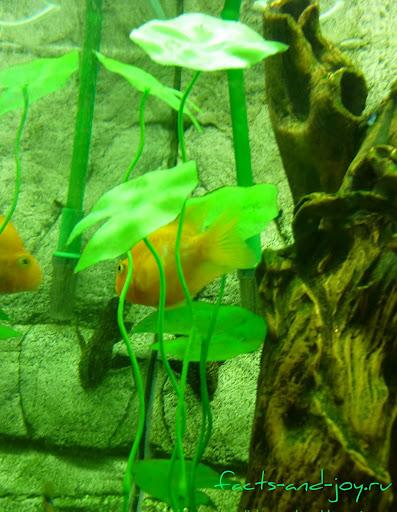рыбки новосибирского зоопарка