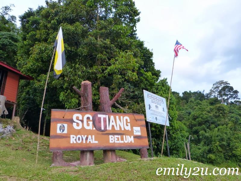 Sg Tiang Royal Belum