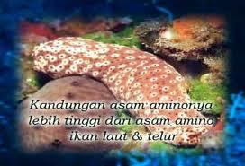 Kandungan teripang (sea cucumber)
