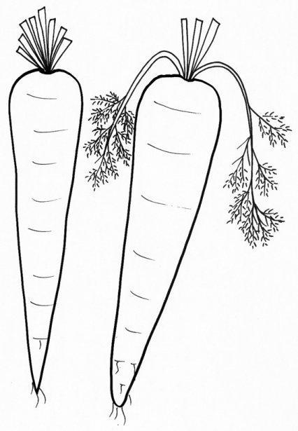 Zanahoria En Caricatura Para Pintar Imagui Cuando ya esté impreso, los niños podrán colorearlo durante su tiempo libre. zanahoria en caricatura para pintar