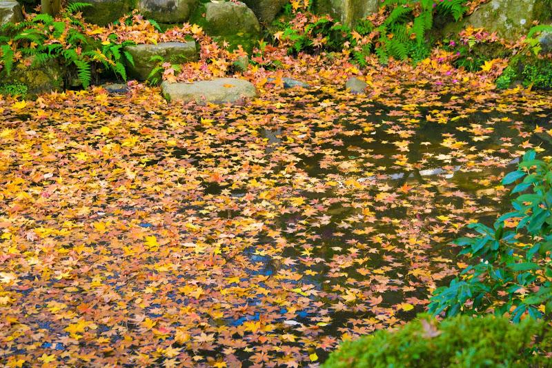 京都 永観堂 紅葉 写真9