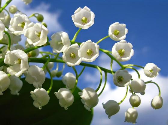 hoa tươi đà nẵng - ý nghĩa các loại hoa