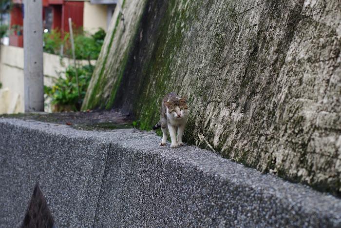 金山貓蹤2