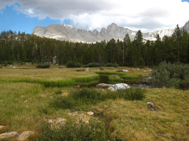 meadow along Wallace Creek