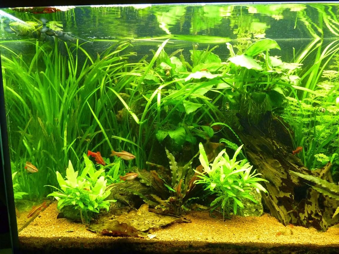 Ma petit histoire Aquariophile de 2009 à aujourd'hui  P1060135