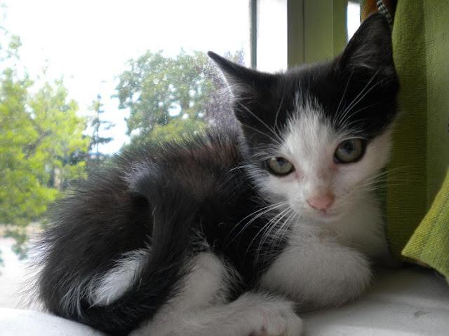 DOBI,chiquitin encantador y reguapo, ¡Adoptado! DSCN5295