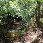 Following the edge of the creek (131332)