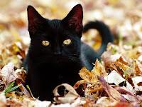gato preto sorte olho de gato pedra olhar felino