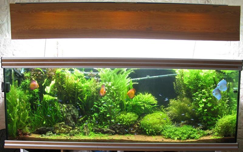 Amazonien 800 litres Aquarium-aquascaping-final8%252520%25255B1024x768%25255D