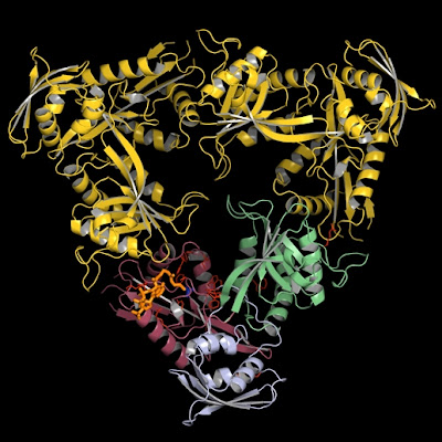 Drug-resistant tuberculosis strain running amok