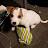 pitbull lover avatar image