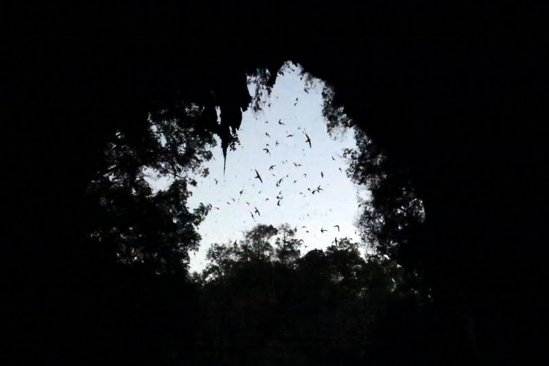 Swifts entering Tham Lod