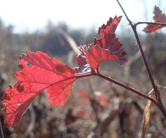 резные осенние листья