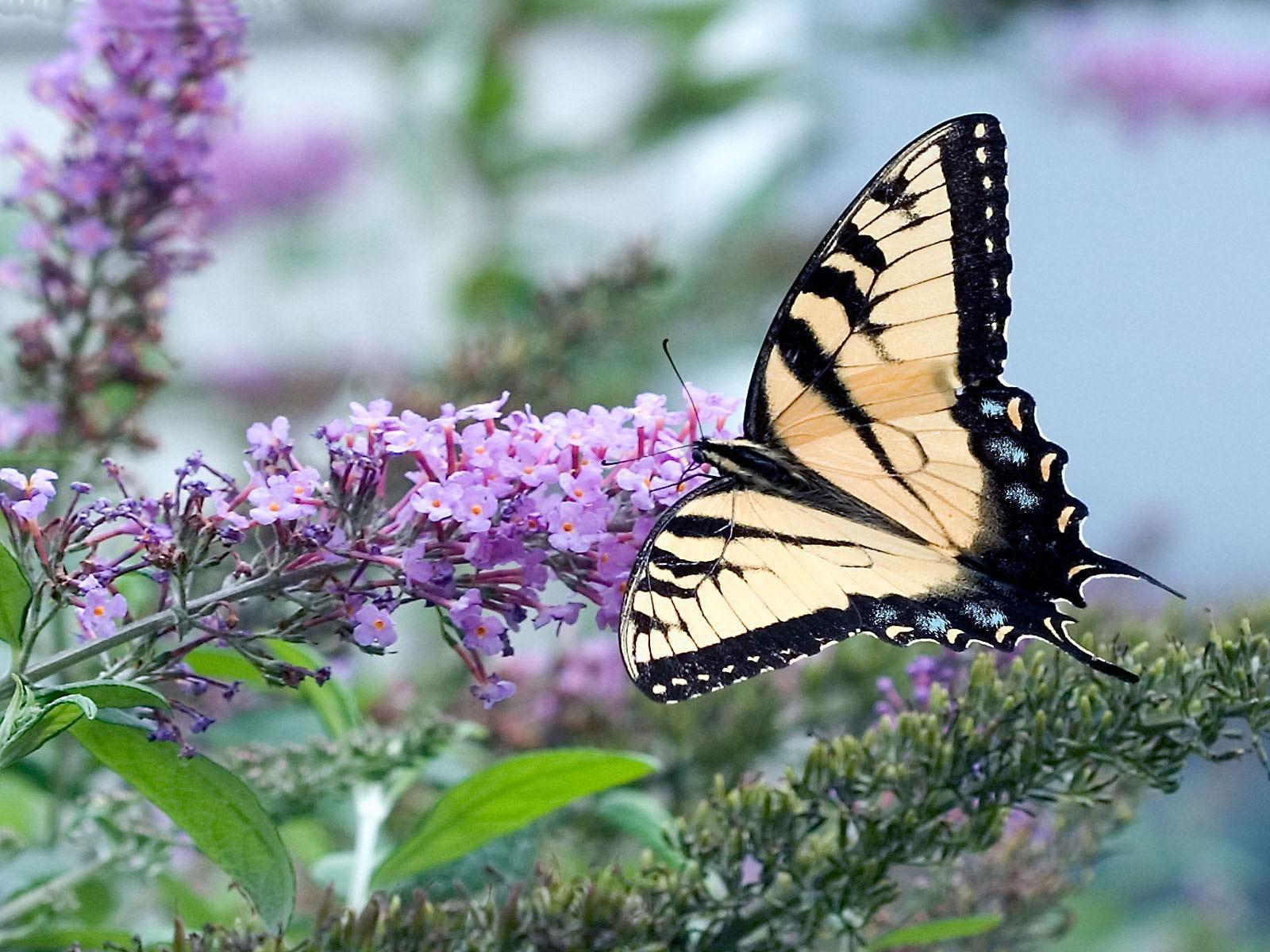 21 mooie kleurrijke vlinder - photo #19