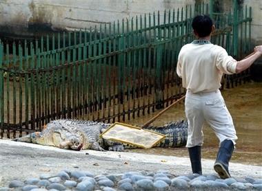zoo crocodile bite