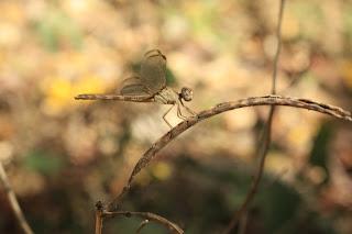 wildlife photography in Laguna de Apoyo