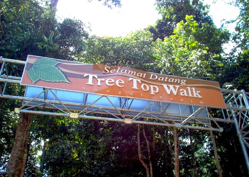 The-Tree-Top-Walk-Sungai-Sedim