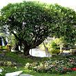 17  zákutie s vodopádom, jazierkom a exotickými drevinami a kvetmi.JPG