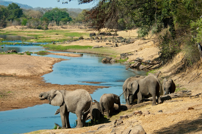 Elephants drinking water in the Ruaha National Park