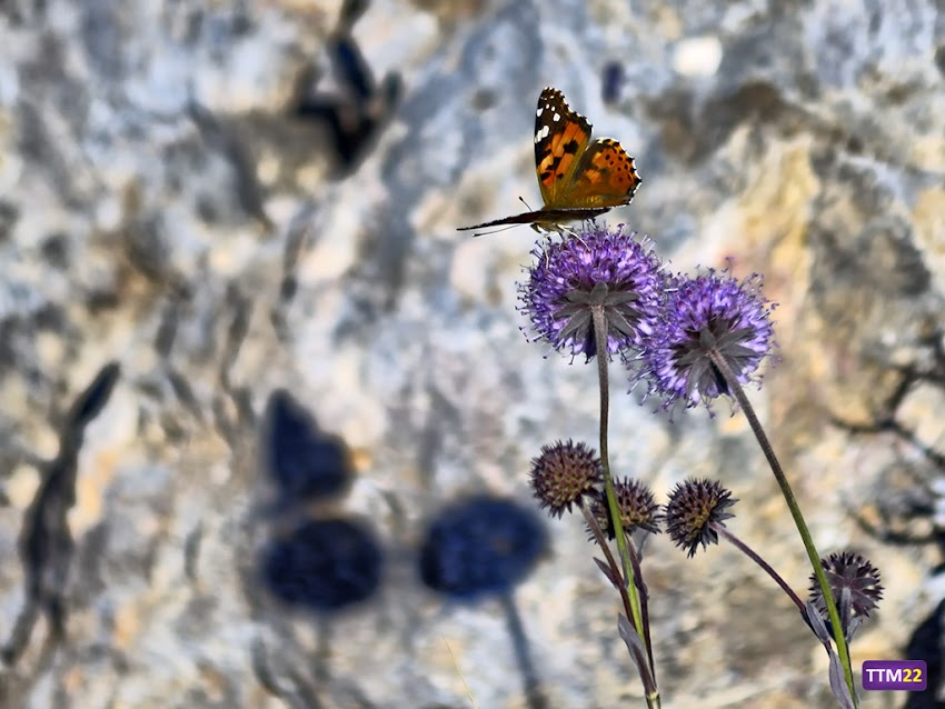 Nikon D5100, 55-200 mm, Naturaleza, Fauna, Flora, Macro, Sombra, Mariposa,