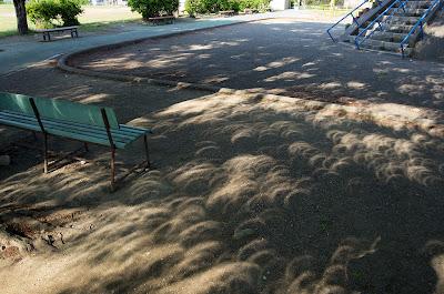 木漏れ日で見る金環日食(その1)