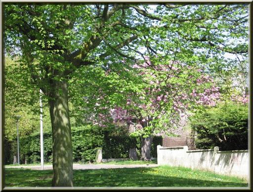 fleurs printemps 2