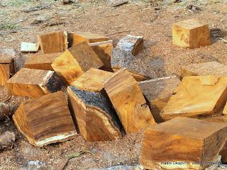 Des morceaux de bois. Radio Okapi/Ph. John Bompengo