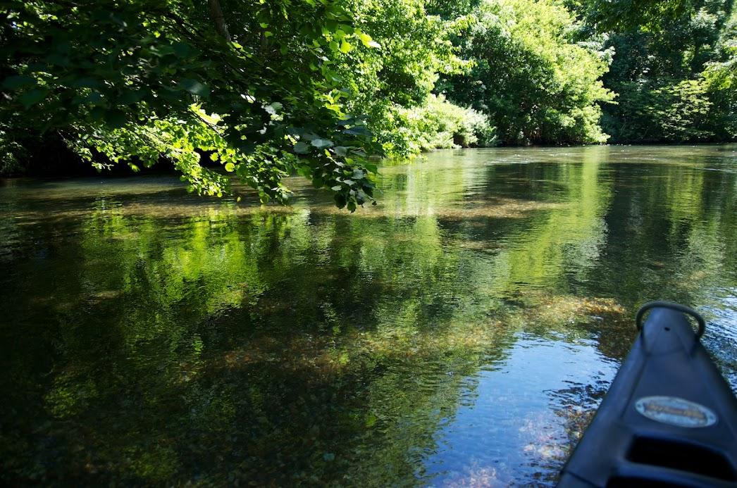水面に映る木々の緑