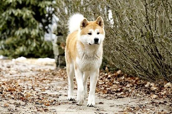 Chó và những câu chuyện để suy ngẫm-13