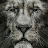 Patrick Davis avatar image