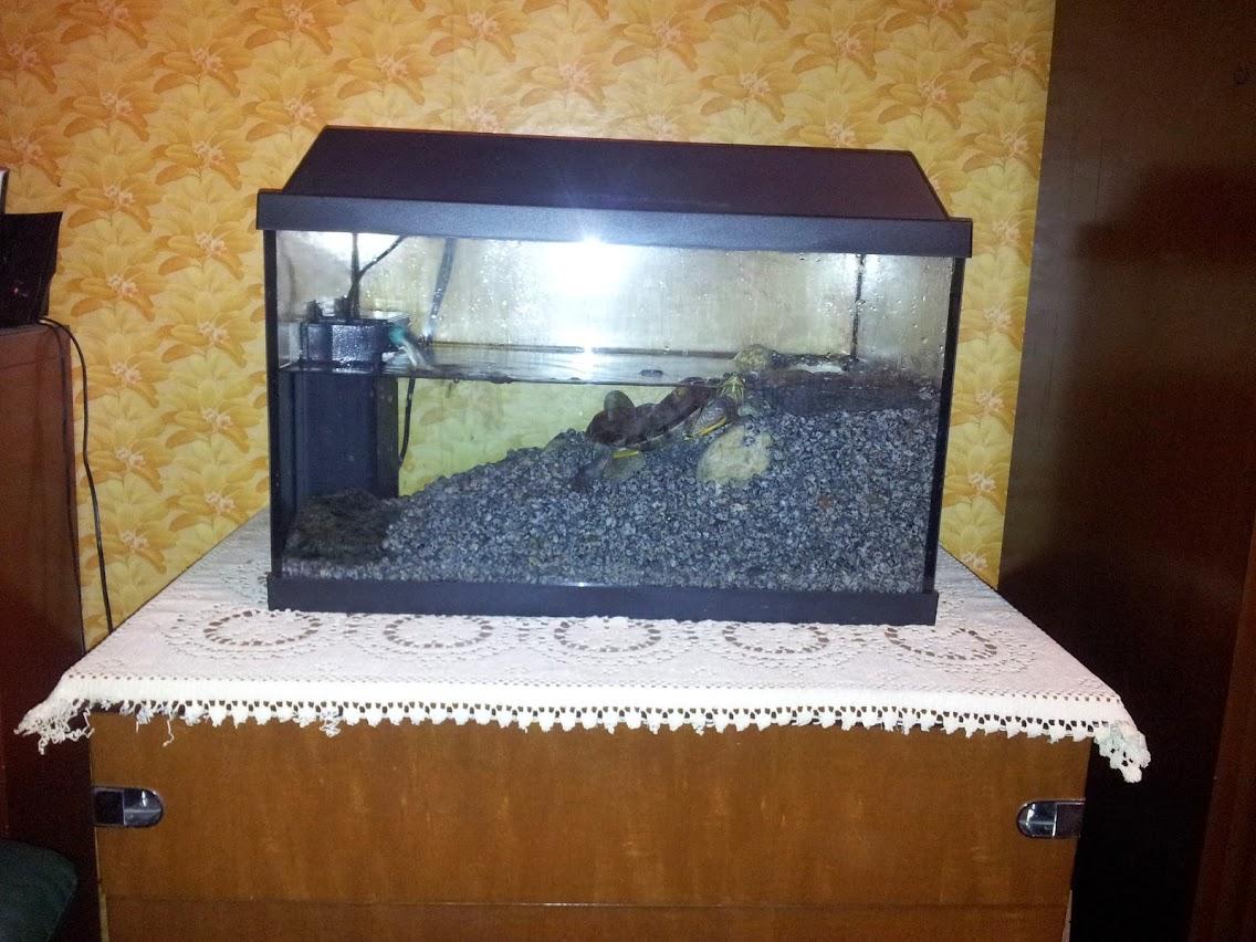 Terracquario problematico neofita sanguefreddo net for Terracquario per tartarughe