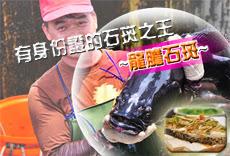 龍膽石斑魚片
