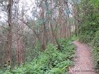 Brooks Creek Trail.