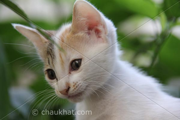 Photo of kitten - Just a look