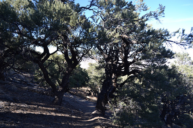 trees along the trail