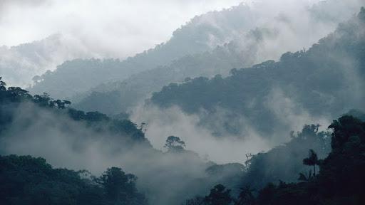 Misty Penas Blancas Valley, Monteverde Cloud Forest Reserve, Costa Rica.jpg