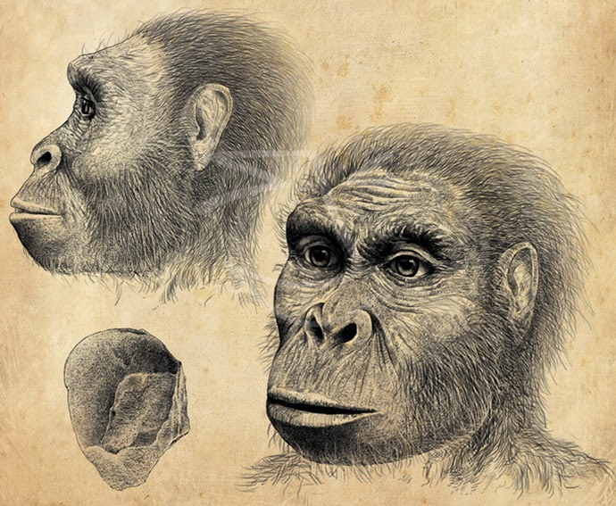 Homo habilis. Ilustración de Stuart Jackson-Carter (http://www.sjcillustration.com)