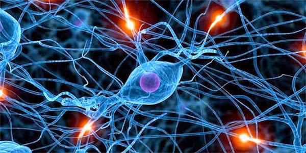 Alzheimer y Mente joven