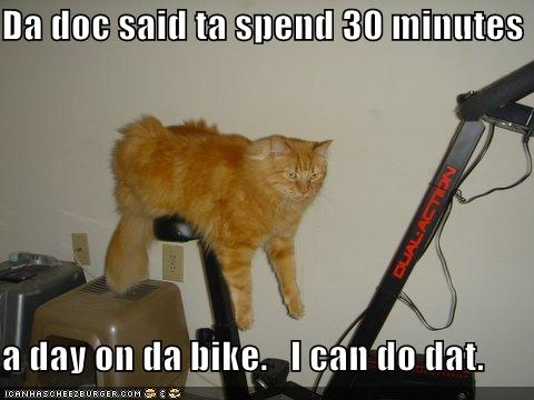 photo of a cat laying on an exercise bike