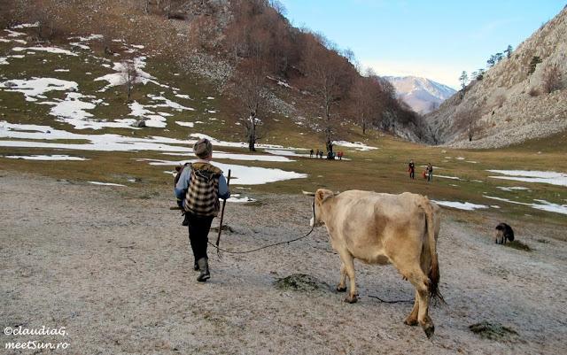 Localnic cu vitele si cu ranita pe Valea Cernei.