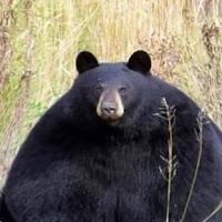 Conor Primett's avatar