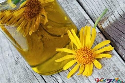 Hoa kim sa loại bỏ chất độc và tăng sức đề kháng cho cơ thể
