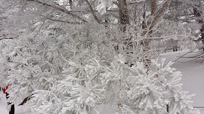 한라산 눈꽃 트레일