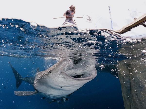 Китовая акула, Новая Гвинея