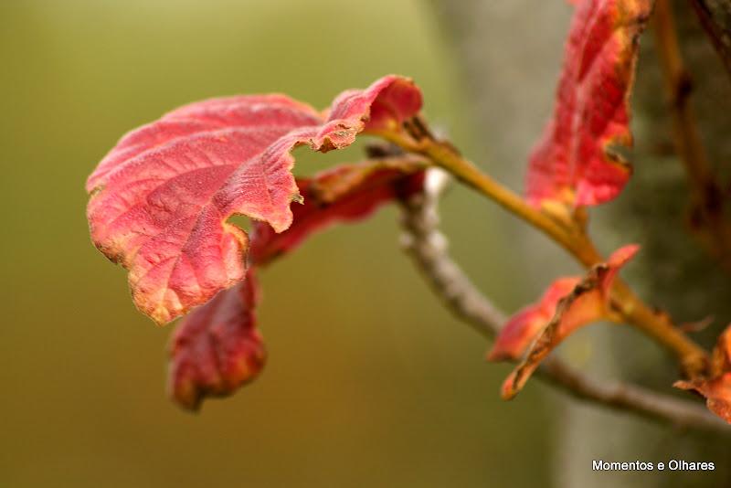 Outono, as últimas folhas