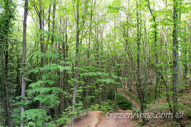 Stella'nın alt tarafındaki orman yolu, Polonezköy Tabiat Parkı