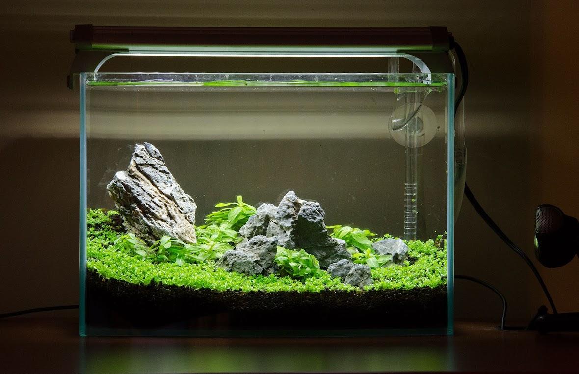 Dorm Nano The Planted Tank Forum