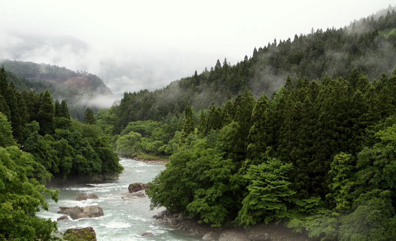 Foggy Mountains in Japan and tenkara